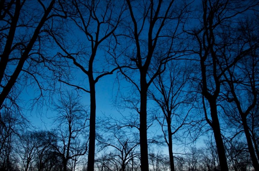 trees 1931