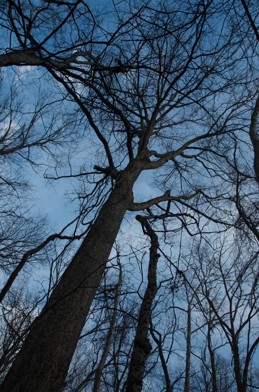 trees 1933